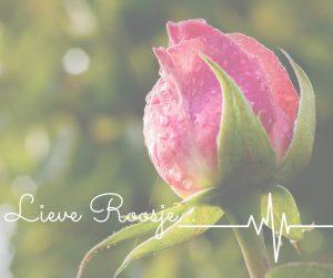 Lieve roosje