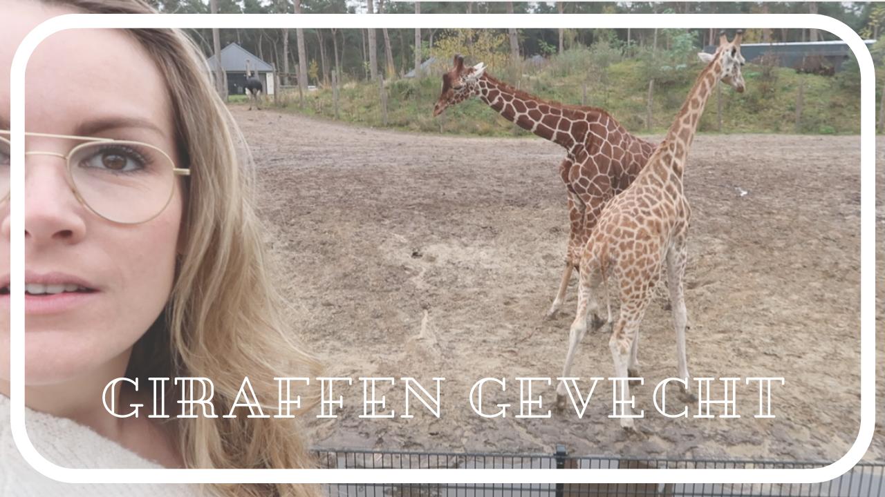 Slapen in de dierentuin en ik ben de slimste – Weekendvlog 74